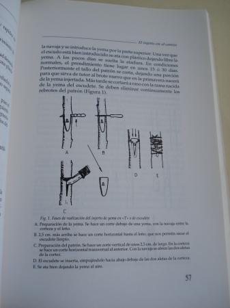 A cerdeira e o seu froito. Xornadas técnicas da II Semana da cerdeira. Beade (Vigo) 1989