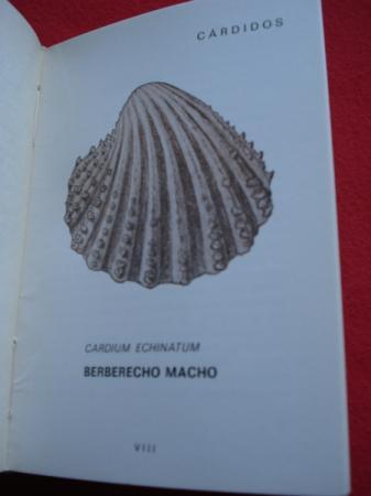 Mariscos de Galicia. Cómo son, cómo viven, cómo se pescan y cómo se comen